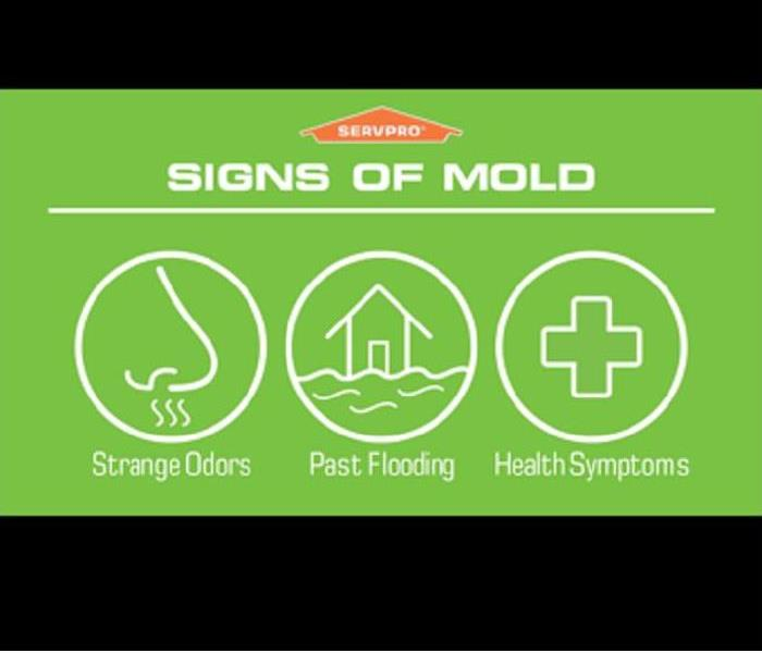 Mold Remediation Mold Allergy Peak in Spring